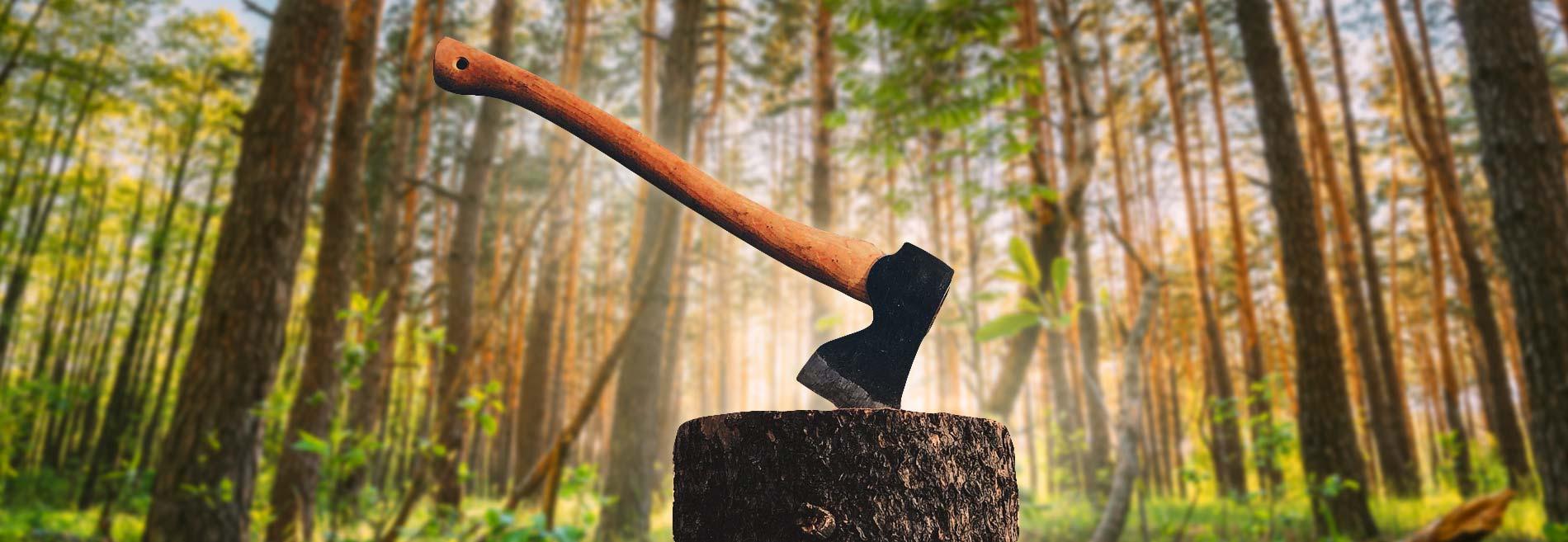 Koumet metsänhoito